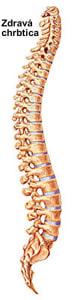 anatomia zdravej chrbtice